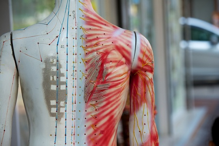 29084165 - chinese acupuncture mannequin on the hong kong street